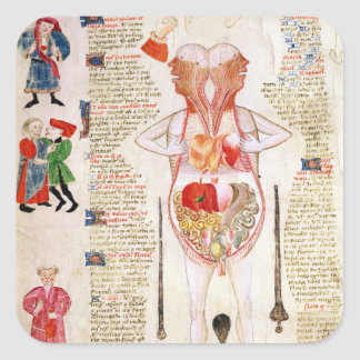 Anatomical diagram square stickers