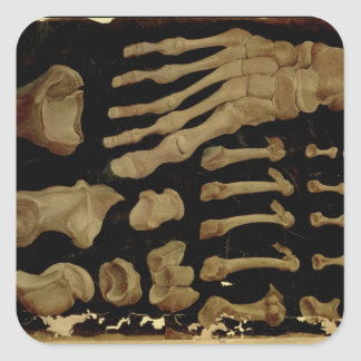 Anatomical drawing of the bones of the foot square sticker