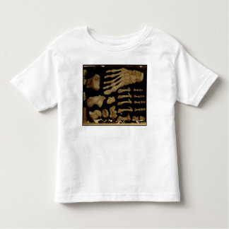 Anatomical drawing of the bones of the foot toddler t-shirt