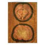 Anatomical drawing of the human brain greeting card