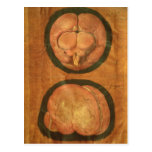 Anatomical drawing of the human brain postcard