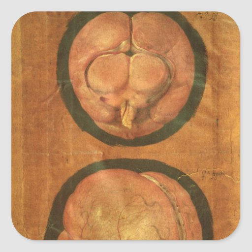 Anatomical drawing of the human brain square sticker