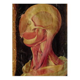Anatomical drawing of the human head postcard