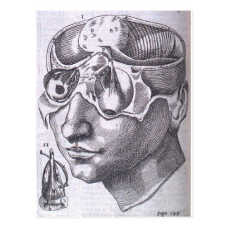 Anatomical Face with Musculature Postcard