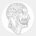 anatomical head round sticker