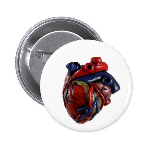 Anatomical Heart Button