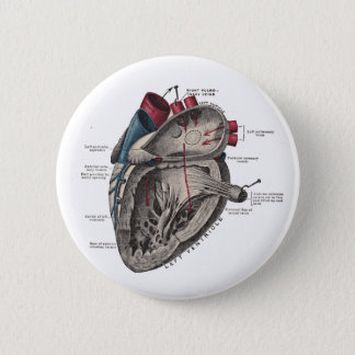 Anatomical Heart Diagram Pinback Button