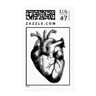 Anatomical Heart Stamp