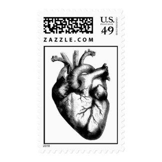 Anatomical Heart Stamp