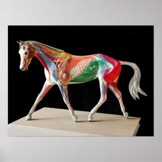Anatomical Horse Poster