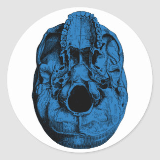 Anatomical Human Skull Base Blue Stickers