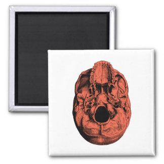 Anatomical Human Skull Base Orange Magnet