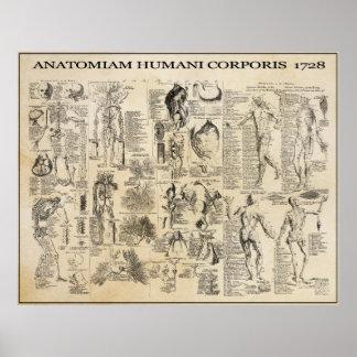 ANATOMICAL MAN  1728 PRINT