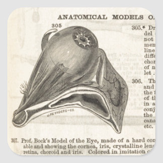 Anatomical Model of the Eye Square Sticker
