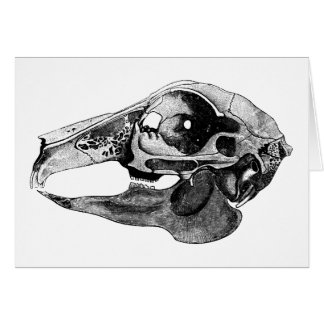 Anatomical Rabbit Skull Black and White Card