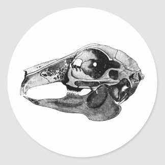 Anatomical Rabbit Skull Black and White Classic Round Sticker