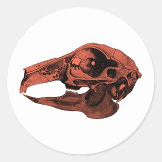 Anatomical Rabbit Skull Orange Classic Round Sticker