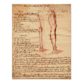 Anatomical Sketch Poster
