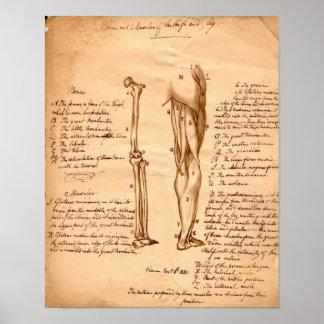 Anatomical Sketch Poster