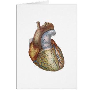 Anatomically Correct Heart Card