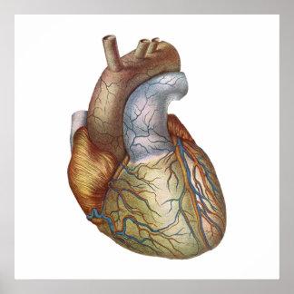 Anatómico corazón de Corect Póster