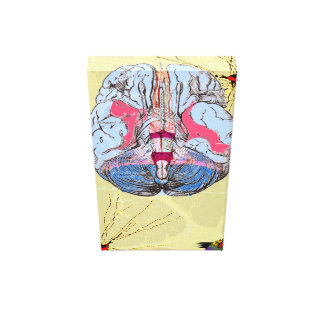anatomista impresiones de lienzo