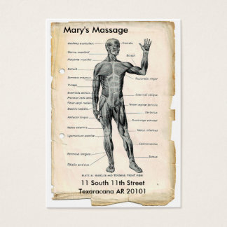 Anatomy Anterior and Posterior Business Card