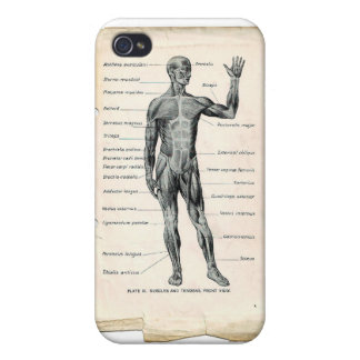 Anatomy Anterior Vintage Drawing Cases For iPhone 4