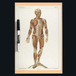 "Anatomy Anterior Vintage Drawing Dry-Erase Board<br><div class=""desc"">This just might be the perfect dry erase board for your massage space,  yoga studio,  or reiki center.</div>"