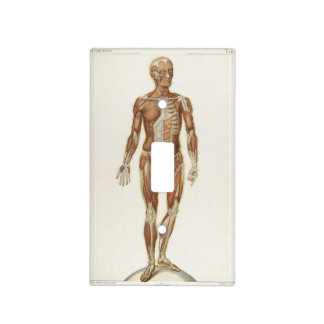 Anatomy Anterior Vintage Drawing Light Switch Plate