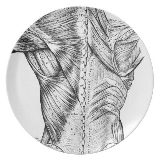 Anatomy Art Black and White  Back Muscles (1890) Plates