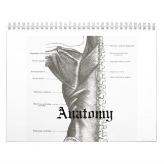 Anatomy Calender Calendar