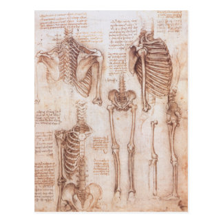 Anatomy Drawings Human Skeletons Leonardo da Vinci Post Card