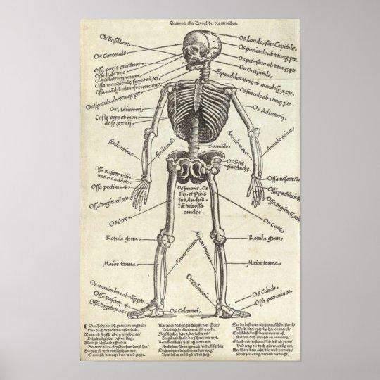 Anatomy Engraving Poster