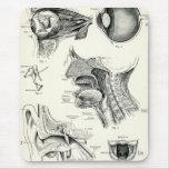 Anatomy - Human Senses Mouse Pad