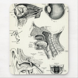 Anatomy - Human Senses Mouse Pad