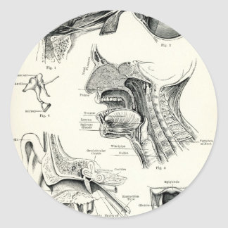 Anatomy - Human Senses Round Stickers