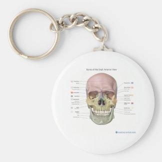 Anatomy keychain