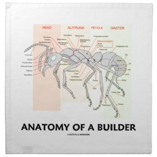 Anatomy Of A Builder (Worker Ant Anatomy)