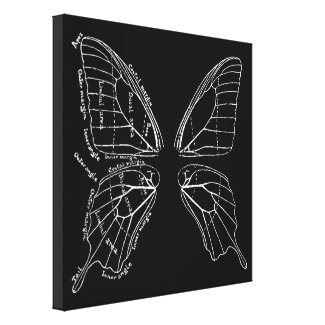 Anatomy Of A Butterfly Wing Vintage Diagram Stretched Canvas Print
