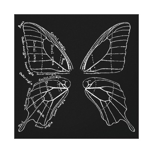 Anatomy Of A Butterfly Wing Vintage Diagram Canvas Print   Zazzle.com