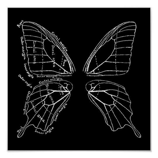 Anatomy Of A Butterfly Wing Vintage Diagram Poster | Zazzle.com