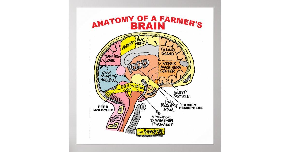 ANATOMY OF A FARMER\'S BRAIN POSTER | Zazzle.com