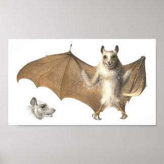 Anatomy of a Fruit Bat - Antique Engraving Poster