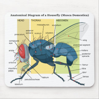 Anatomy of a Housefly Diagram Musca Domestica Mouse Pads