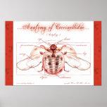 Anatomy of a Ladybug (Coccinellidae) Poster