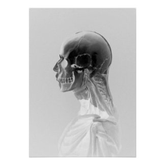 Anatomy of a skull poster