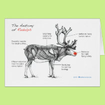 Anatomy of card