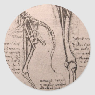 Anatomy of dog and man classic round sticker