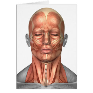 Anatomy Of Human Face And Neck Muscles, Front Card